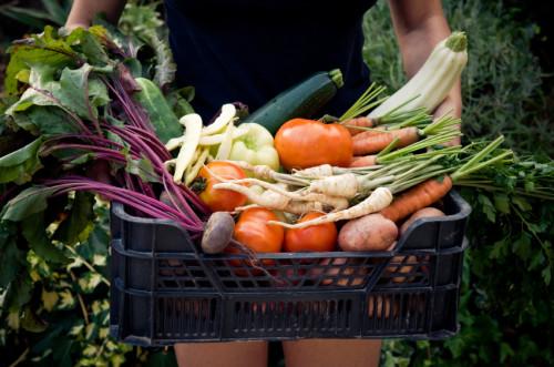 Warzywa_ekologiczne